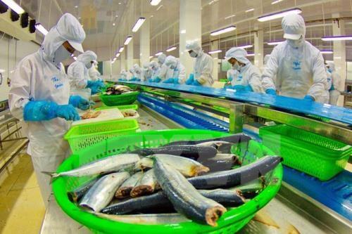 La Chine pourrait devenir le plus grand importateur de pangasius du Vietnam en 2017 hinh anh 1
