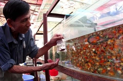 Les exportations de poissons d'aquarium se marchent bien hinh anh 1