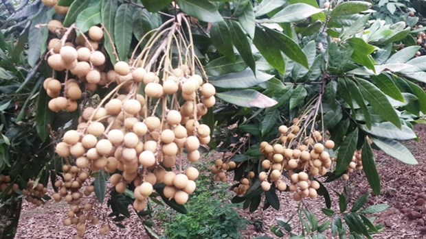 Bond des exportations nationales de fruits et legumes hinh anh 1