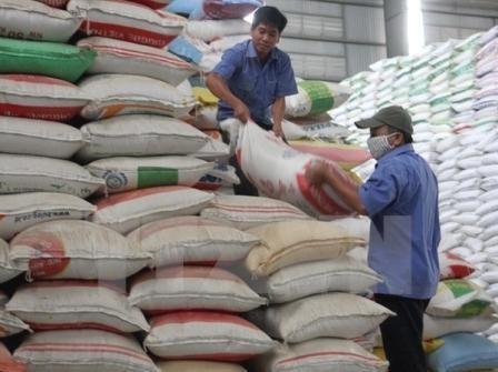 Octroi gratuit de plus de 1.000 tonnes de riz a Phu Yen hinh anh 1