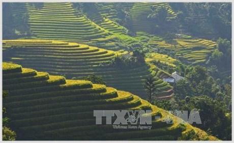 Exposition photographique sur les rizieres en gradins du Tay Bac hinh anh 1