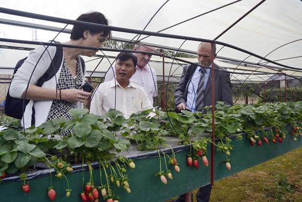 Da Lat sera un centre de production de legumes No.1 en Asie du Sud-Est hinh anh 1