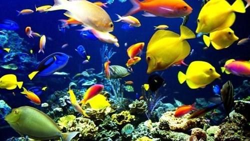 Le Vietnam et la Russie cooperent dans l'etude sur la biodiversite des eaux au Centre hinh anh 1