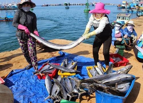 Nouvelle ruralite: Phu Quy, le 2e district insulaire du pays repondant aux criteres hinh anh 1