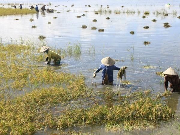 BM : consultation sur la strategie de cooperation nationale dans le delta du Mekong hinh anh 1