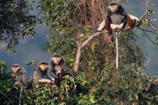 Exposition photographique sur la biodiversite a Son Tra hinh anh 1