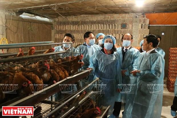 Hanoi : restructuration agricole exemplaire dans le district de Chuong My hinh anh 1