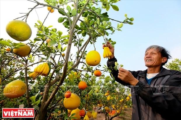 A la (re)decouverte des specialites du Tet au Vietnam hinh anh 2