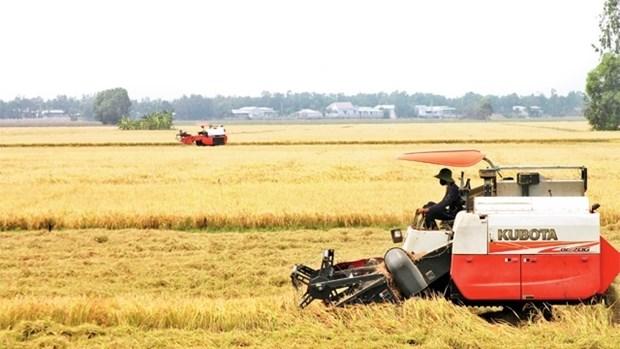 Fierte du secteur du riz vietnamien hinh anh 1