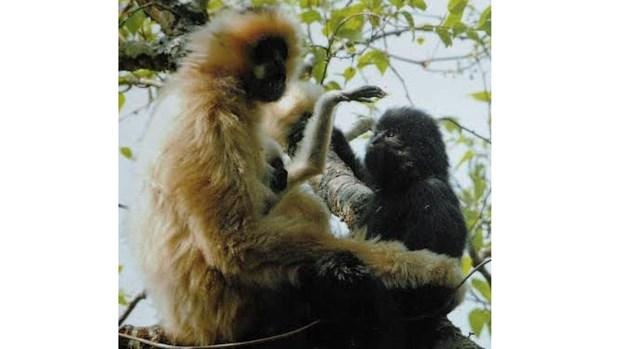 La reserve naturelle de Muong La a vu le jour hinh anh 1