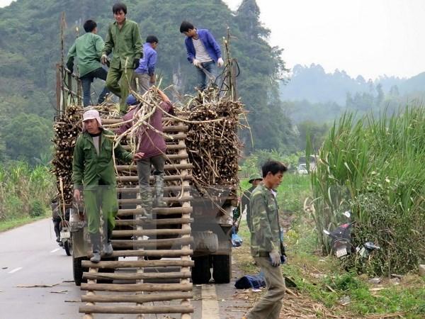 Le Vietnam s'interesse toujours a la reduction durable de la pauvrete hinh anh 1