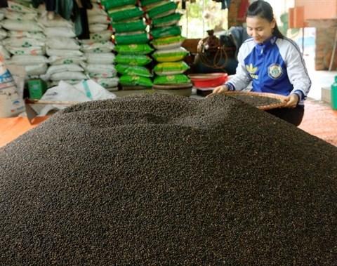 Le Vietnam table sur 1,6 milliard de dollars d'exportations de poivre en 2017 hinh anh 1