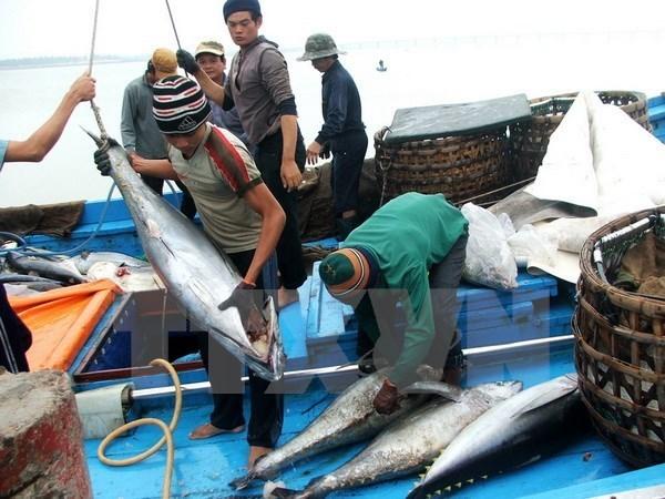 Demande de revision des taxes sur les thons vietnamiens expedies au Japon hinh anh 1
