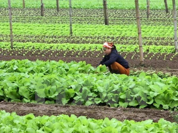 Un groupe neerlandais construira un centre de production de semis de legumes a Ha Nam hinh anh 1