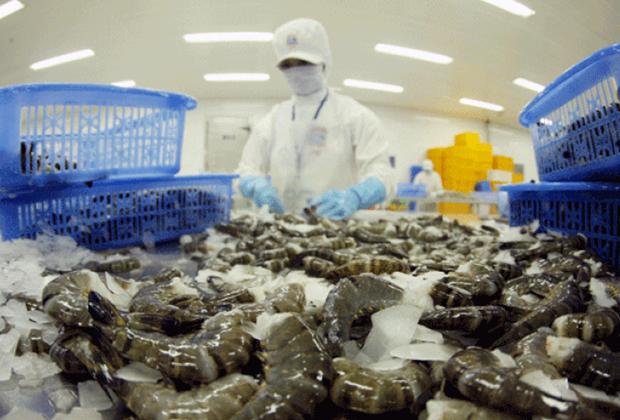 Les exportations de crevettes devraient atteindre 3,4 milliards de dollars en 2017 hinh anh 1