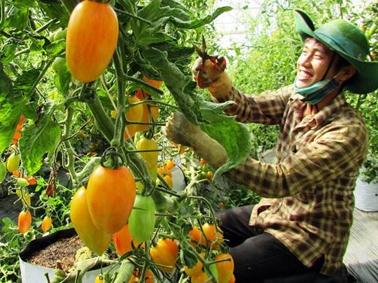 Le secteur agricole du Vietnam seduit les investisseurs japonais hinh anh 1