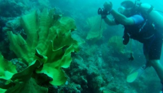 L'Indonesie et les Etats-Unis cooperent dans la conservation de l'habitat marin hinh anh 1