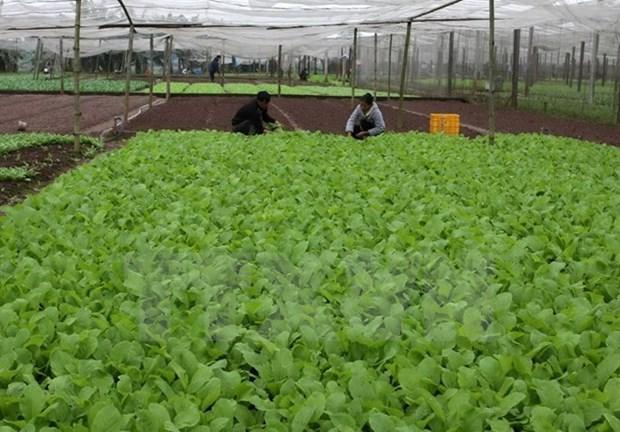La Republique de Coree aide Quang Tri a developper l'agriculture biologique hinh anh 1