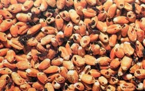 Le Vietnam suspendra ses importations de cinq produits agricoles d'Inde hinh anh 1