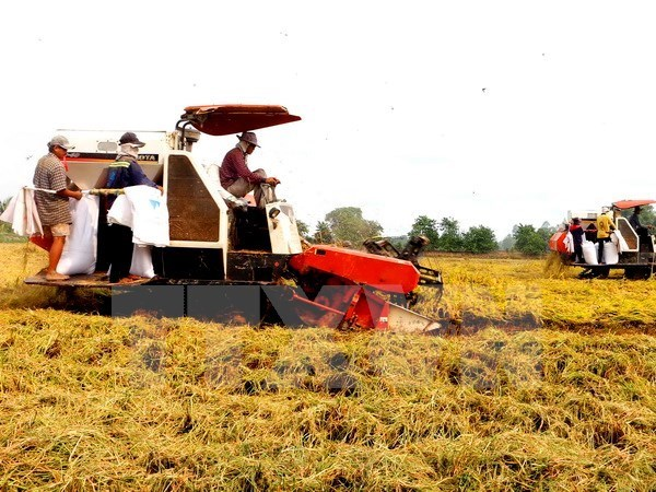 Tien Giang restructure la production agricole hinh anh 1