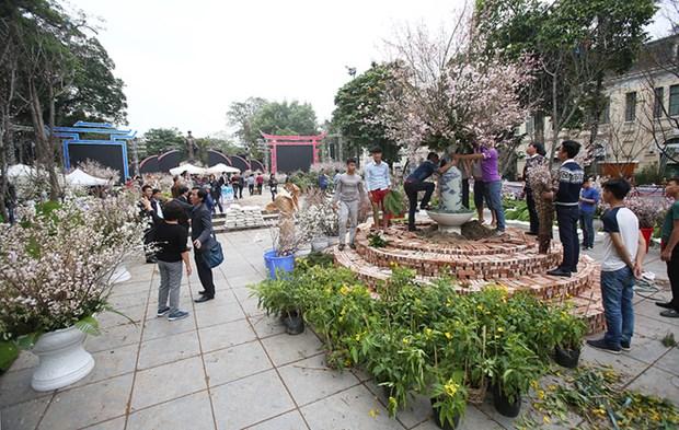 Fete des cerisiers en fleurs a Hanoi, symbole de l'amitie Vietnam-Japon hinh anh 1