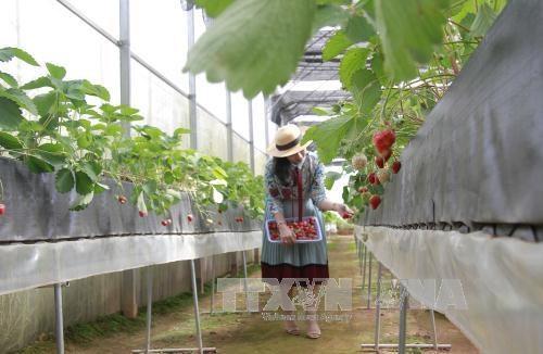 Le Vietnam attire les capitaux japonais dans l'agriculture hinh anh 1