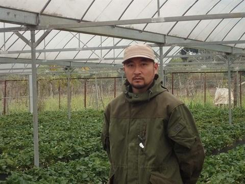 Nahana Shojiro, les fraisiers japonais de la passion a Moc Chau hinh anh 1