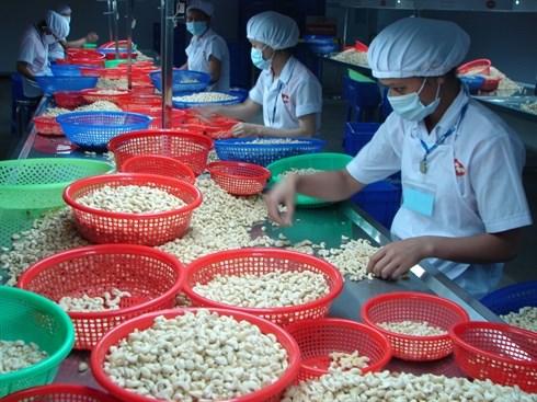 Les exportations de noix de cajou en baisse hinh anh 1