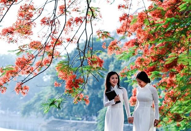 Bientot Festival des flamboyants rouges a Hai Phong hinh anh 1