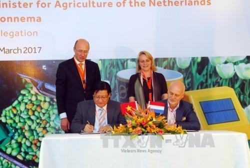 Les Pays-Bas aident le Vietnam a developper une agriculture durable hinh anh 1