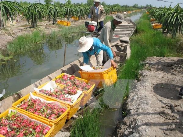 L'Inde annulera sa suspension d'importation de produits agricoles vietnamiens hinh anh 1