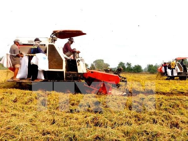 Hau Giang fait appel a l'investissement dans l'agriculture high-tech hinh anh 1
