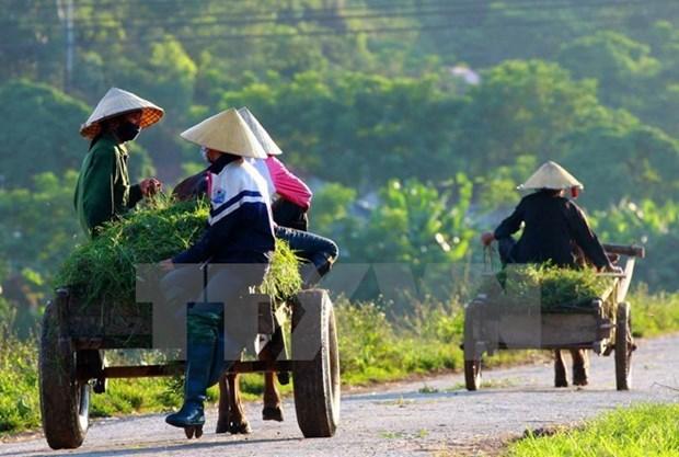 L'IFAD accordera 43 millions de dollars pour soutenir des foyers paysans vietnamiens hinh anh 1