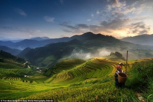 Une photo de Mu Cang Chai primee a l'international hinh anh 1