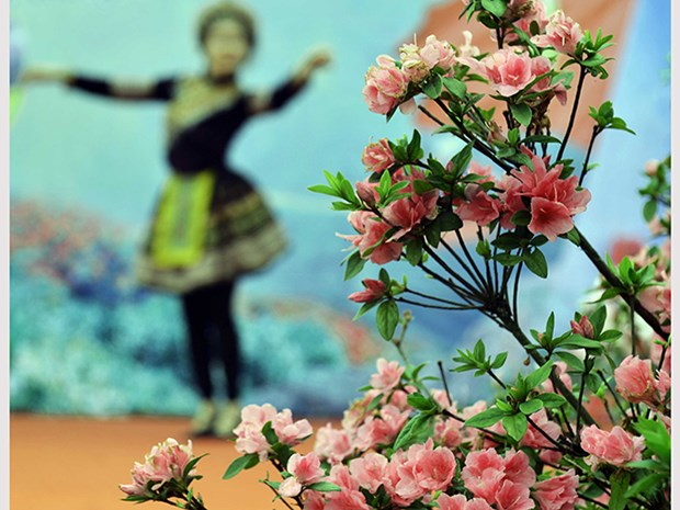 La fete des fleurs de rhododendron a Sa Pa hinh anh 3