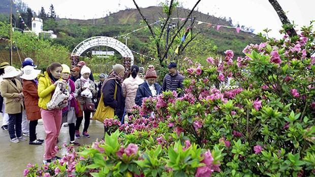 La fete des fleurs de rhododendron a Sa Pa hinh anh 2