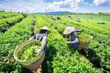 The de Thai Nguyen: Europe et Amerique du Nord consideres comme des marches cibles hinh anh 1