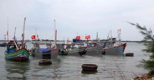La vie de la population du Ha Tinh s'ameliore de plus en plus apres l'incident de Formosa hinh anh 1