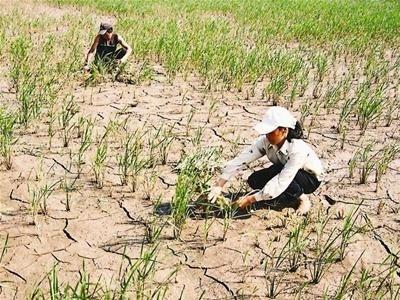 Changements climatiques: l'ONU s'engage a cooperer a long terme avec le Vietnam hinh anh 1
