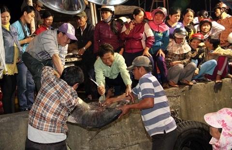 Le retablissement des activites de peche suite au scandale de Formosa hinh anh 1