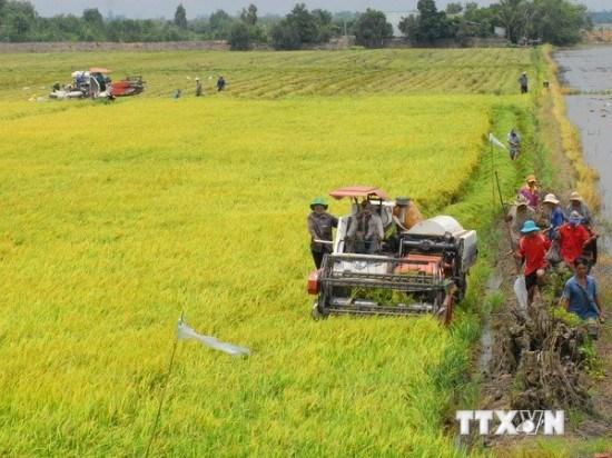 Le Vietnam conjugue les efforts pour s'adapter aux changements climatiques hinh anh 1