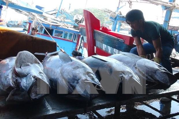 Chine et Vietnam accelerent le developpement durable de la peche dans le golfe du Bac Bo hinh anh 1