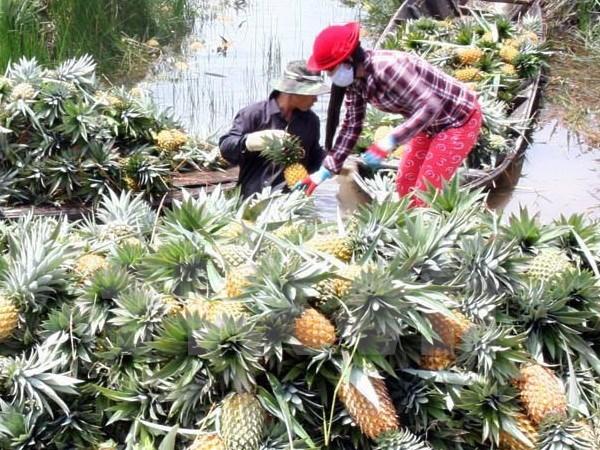 Agriculture: la R. de Coree cherche des opportunites d'investissement a Hau Giang hinh anh 1
