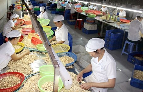 Les Etats-Unis, premier consommateur de noix de cajou du Vietnam hinh anh 1
