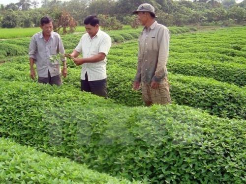 Les entreprises japonaises veulent investir dans l'agriculture biologique a An Giang hinh anh 1