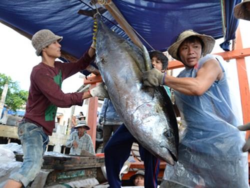 Le thon vietnamien exporte sur 138 marches du monde hinh anh 1