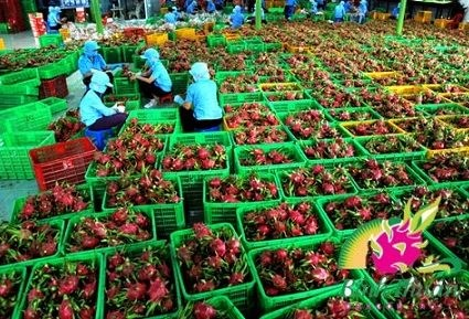 Croissance exceptionnelle pour les exportations de fruits et legumes hinh anh 1