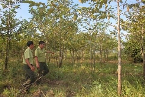 La surface forestiere couvre pres de 41,19% au Vietnam hinh anh 1