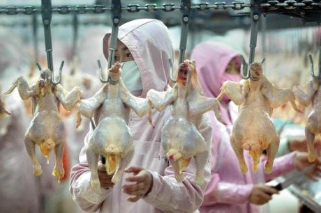 Espoir pour les exportations de produits de volaille au Japon hinh anh 1