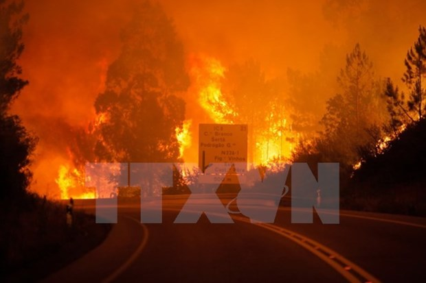 Incendies de foret : message de sympathie au Portugal hinh anh 1